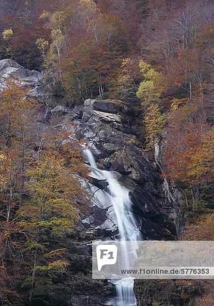 Wasserfall in herbstlichem Laubwald  Tessin  Schweiz Wasserfall in herbstlichem Laubwald, Tessin, Schweiz