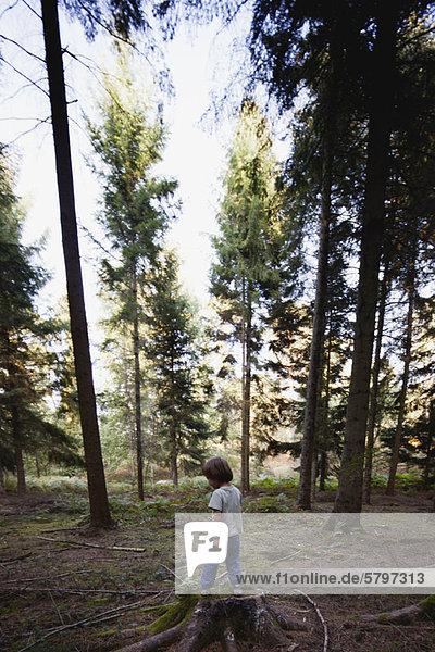 Junge auf Baumstumpf im Wald stehend