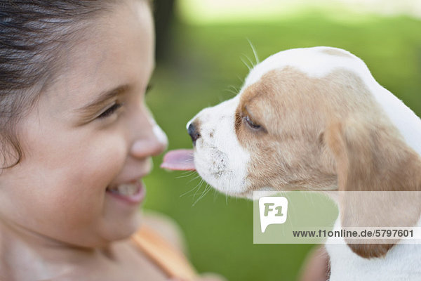 Beagle puppy licking girl's nose