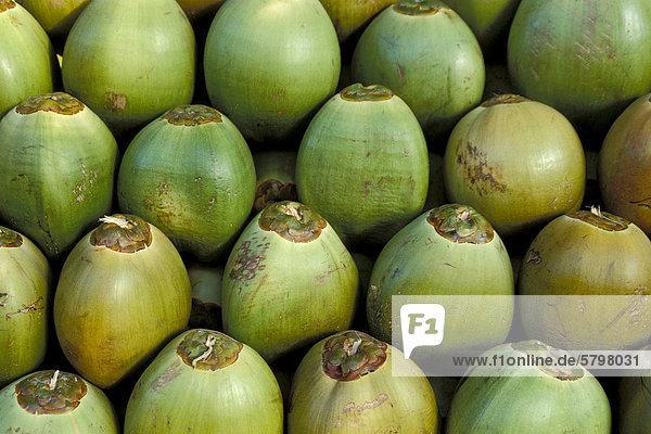 Aufgeschichtete Kokosnüsse  Kerala  Südindien  Indien  Asien