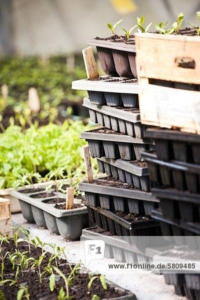 Stapel von Anzuchtschalen im Garten