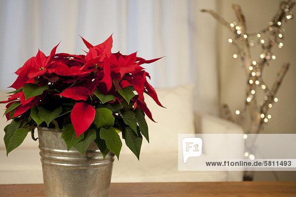 sternförmig Weihnachten Tisch