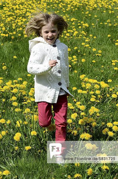 Girl  six years  running in field of dandelion  Ystad  SkÂne  Sweden  Europe