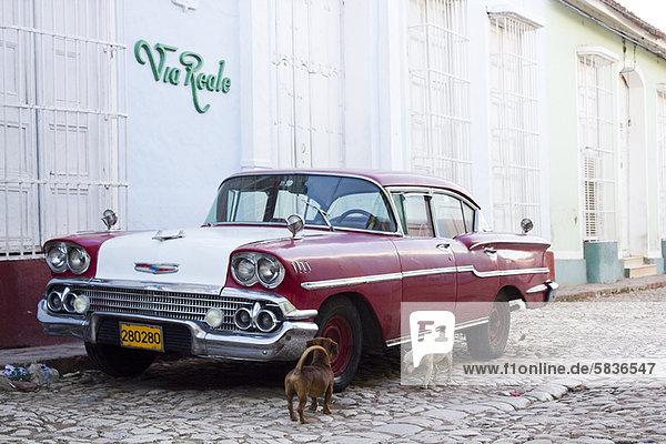 Hunde untersuchen Oldtimer auf der Straße