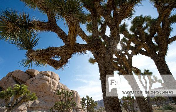 Wüste Bäume