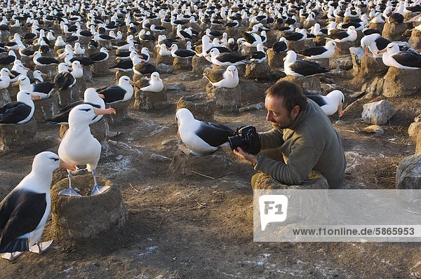 Fotograf bei der Arbeit in schwarz-Granada Albatros Kolonie  Steeple Jason Island  Falkland-Inseln