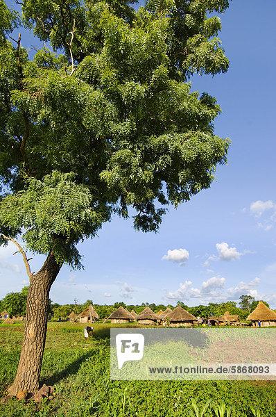 Fongoli Dorf  Senegal