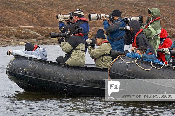 Touristen fotografieren Eisbär  Spitzbergen  Norwegen