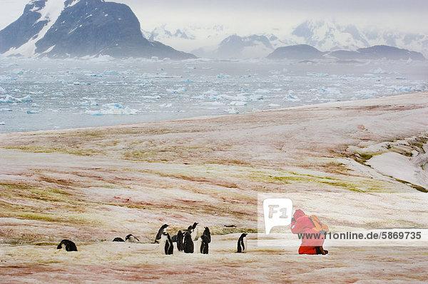 Touristen fotografieren Gentoo Pinguine  Petermann-Insel  Antarktis