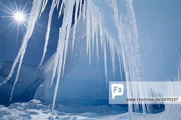 Eiszapfen und Sonne  Alta Bay  Antarktis
