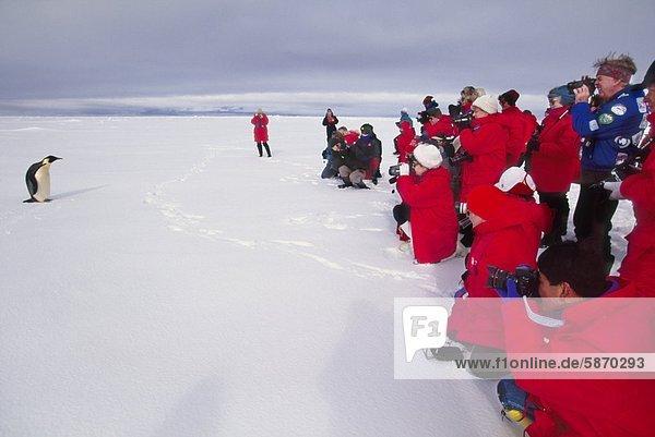 Touristen beobachten Kaiserpinguin  Weddell Sea  Antarctica
