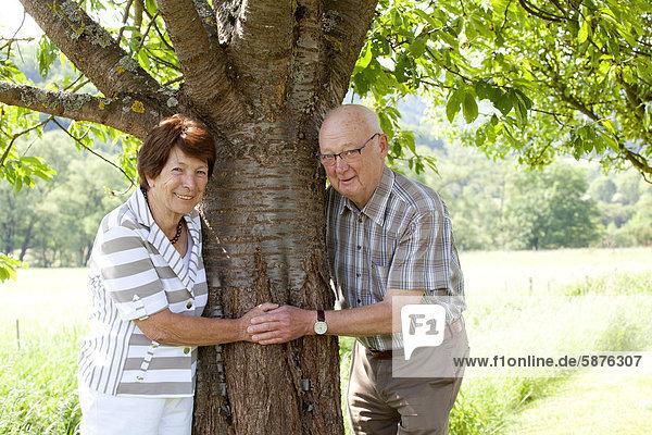 Älteres Ehepaar,  Senioren,  Rentner,  70-80 Jahre,  Baum,  in Bengel,  Rheinland-Pfalz,  Deutschland,  Europa