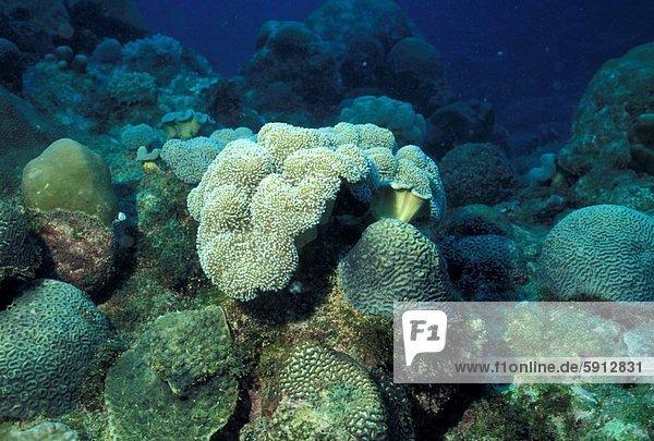 Ozean  Indianer  Mauritius