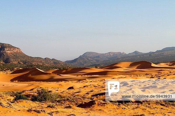 Vereinigte Staaten von Amerika  USA  Sand  pink  Düne  Utah