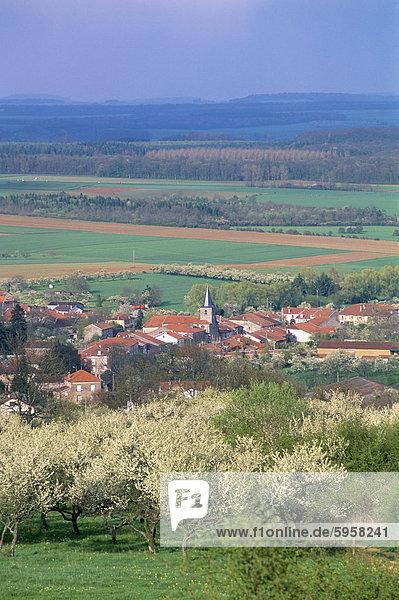 Umgeben von Mirabelle Pflaumenbäume in Blüte  Dorf von Praye  Sion Region  Meurthe-et-Moselle  Lothringen  Frankreich  Europa
