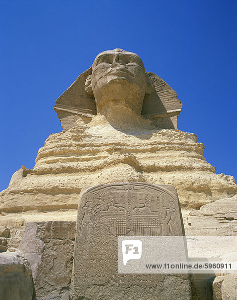 The Great Sphinx and tablet or stela  Giza  UNESCO World Heritage Site  Cairo  Egypt  North Africa  Africa