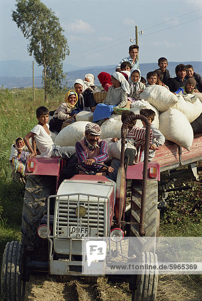 Men women and children on a tractor with bales of cotton at harvest time near Miletus in Anatolia  Turkey  Asia Minor  Eurasia