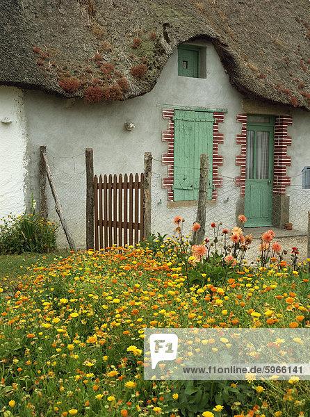 Frankreich Europa Garten Reetdach Dahlie Ringelblume Calendula officinalis Pays de la Loire