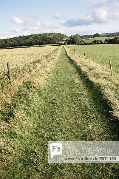 Land Weg  Somerset  England  Vereinigtes Königreich  Europa