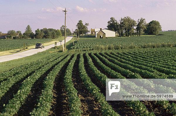 Soja-Felder  Hudson  Illinois  Mittelwesten  USA  Nordamerika