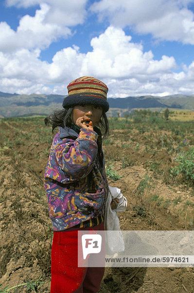 Cuzco  Peru  Südamerika