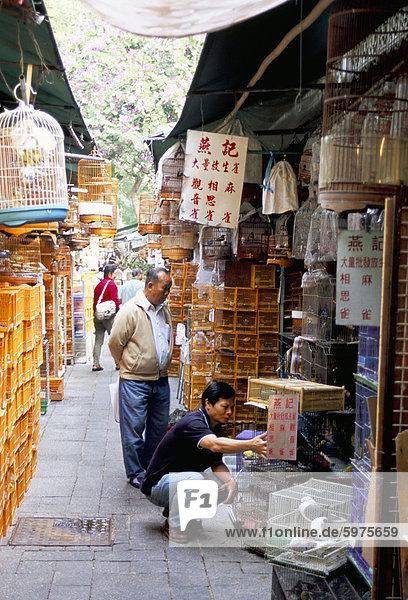 Yuen Po Street Bird Garden  Mongkok  Kowloon  Hong Kong  China  Asien