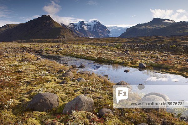 Arctic plants in autumn in Skaftafell National Park  Mount Hafrafell and Svinafellsjokull glacier in the distance  south-east Iceland (Austurland)  Iceland  Polar Regions
