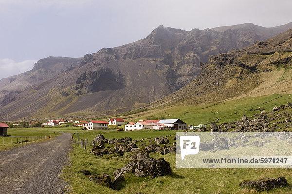 Isländische Schafe  Hof  Südküste  Island  Polarregionen