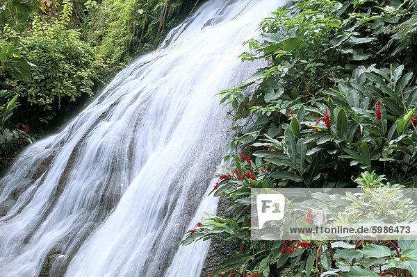 Shaw Wasserfälle  Ocho Rios  Jamaika  Karibik  Mittelamerika
