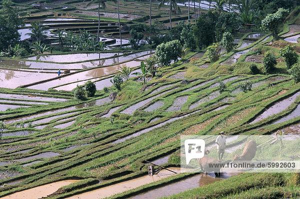 Reis-Terrassen im Zentrum der Insel  Bali  Indonesien  Südostasien  Asien