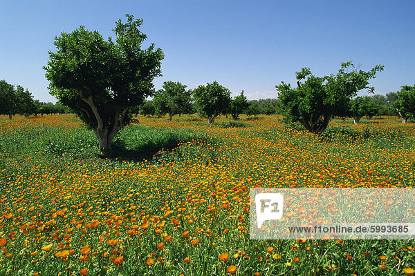 Landschaft an der Fes Marrakesch Route  Marokko  Nordafrika  Afrika