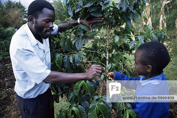 Schoolchildren learning about coffee  Kenya  East Africa  Africa
