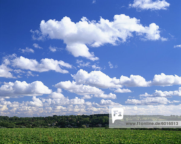 Blue sky with puffy white clouds over farmland in Lincolnshire  England  United Kingdom  Europe