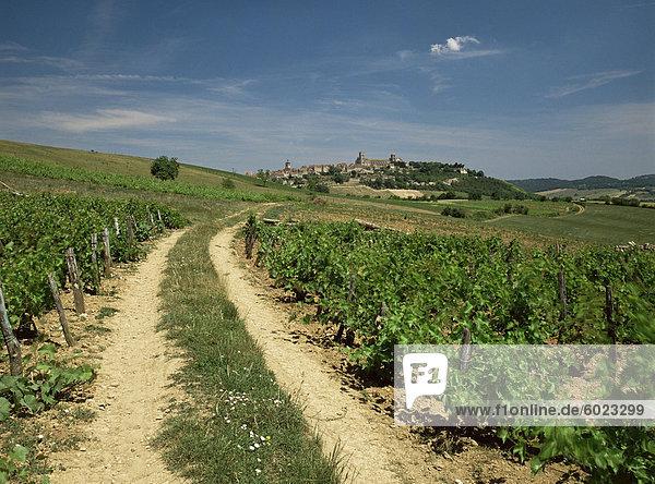 Weinberge mit Dorf in Distanz  Vezeley  Burgund  Frankreich  Europa