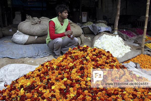 Blume Lieferanten  Delhi  Indien  Asien