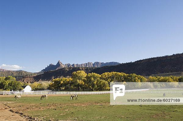 Landscape near Zion National Park  Utah  United States of America  North America