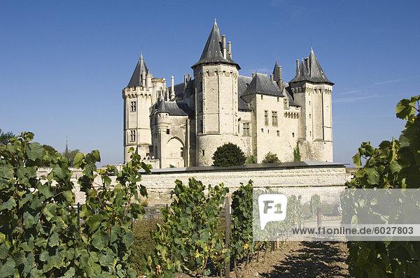 Weinberge um das Chateau de Saumur  Maine-et-Loire  Pays De La Loire  Frankreich  Europa