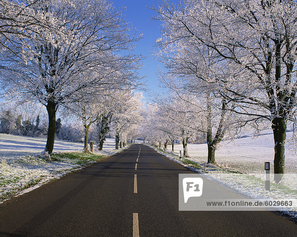 Straight empty road through rural Lincolnshire in winter  England  United Kingdom  Europe