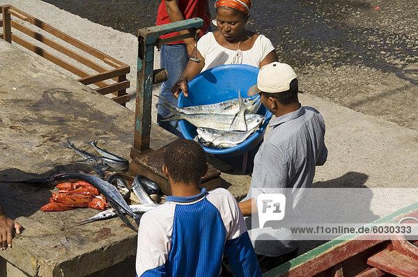 Ausnehmen Fisch am Hafen von Ponto tun Sol  Ribiera Grande  Santo Antao  Kapverdische Inseln  Atlantik  Afrika