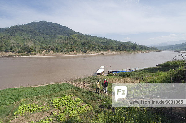 Crops on side of Mekong River at Gom Dturn  a Lao Luong Village in the Golden Triangle area of Laos  Indochina  Southeast Asia  Asia