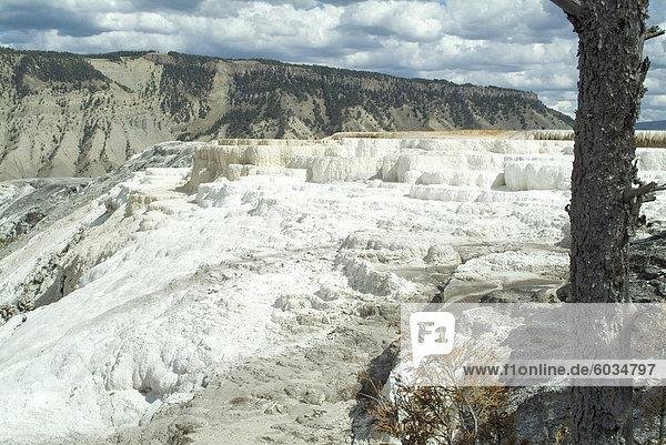Mammut Thermalbad  Yellowstone National Park  UNESCO World Heritage Site  Wyoming  Vereinigte Staaten von Amerika  Nordamerika