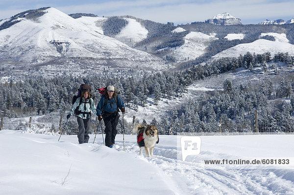 Frau  bedecken  Hund  Skisport  Wiese  groß  großes  großer  große  großen  Colorado  Schnee
