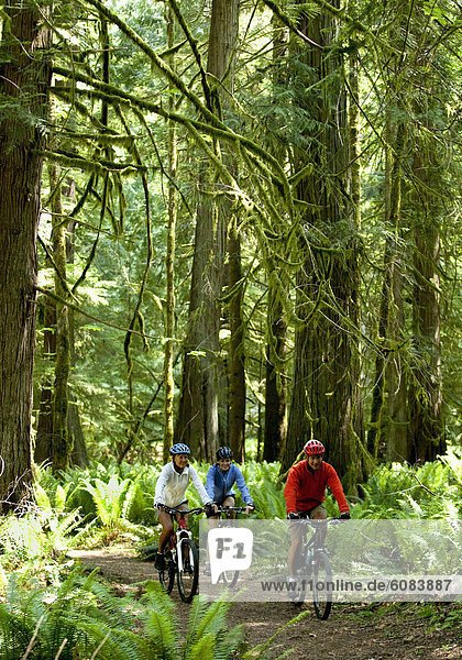 Berg  fahren  Wald  Regen  3  Olympische Spiele  Olympiade  Steinschlag  Moos  Halbinsel  dicht