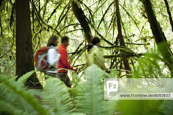 Fokus  gehen  folgen  grün  Wald  Farn  wandern  3  auswählen  Moos  dicht