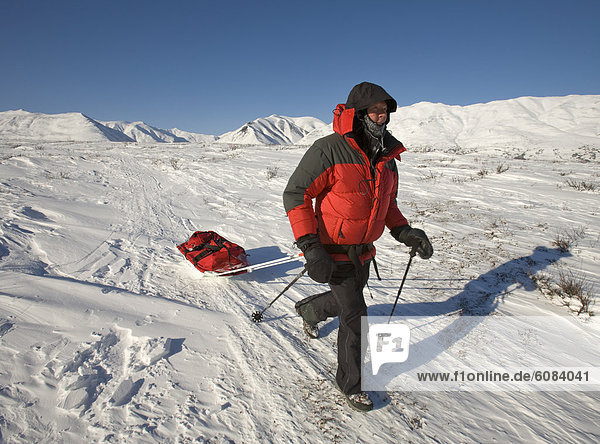 Frau  ziehen  wandern  Alaska  Schlitten  Schnee