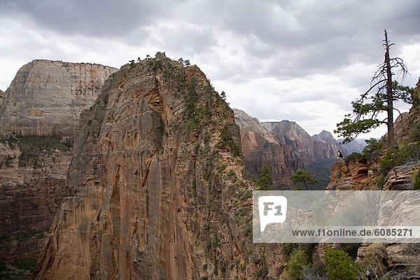 stehend  Fröhlichkeit  folgen  wandern  Ansicht  landen  Zion Nationalpark  Utah
