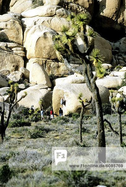 Bergsteiger  entfernt  Baum  Joshua Tree  Yucca brevifolia  Boulder  Kalifornien