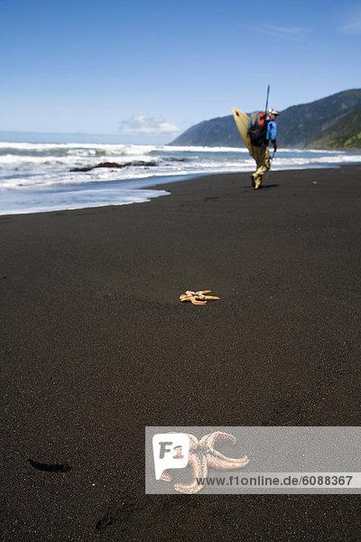 Mann  Strand  Küste  schwarz  Sand  Desorientiert  1  vorwärts  Windsurfing  surfen  Kalifornien  Seestern