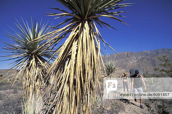 Frau  Mann  Ziel  wandern  Mexiko  klettern
