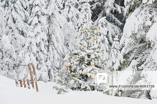 Austria  Salzburg County  Christmas tree and sledge in snowy lands